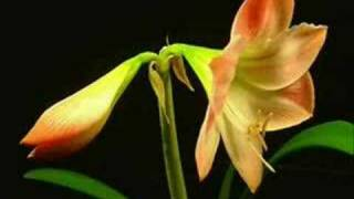 Rose Kemp - Natures Hymn (Promo)