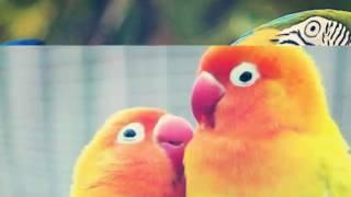 10 Самых красивых фото попугаев♥♥♥