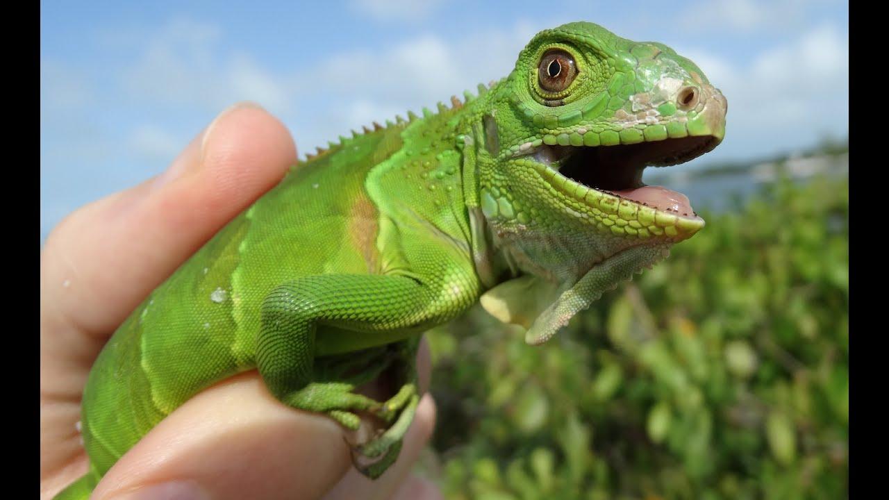 Tucson Reptile Shop