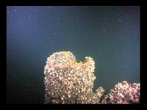 Akwanauta - Trałowiec