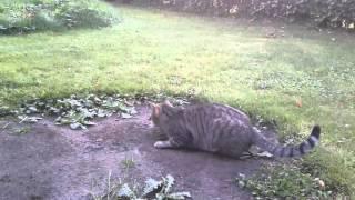 Katze Maus Spiel :-)