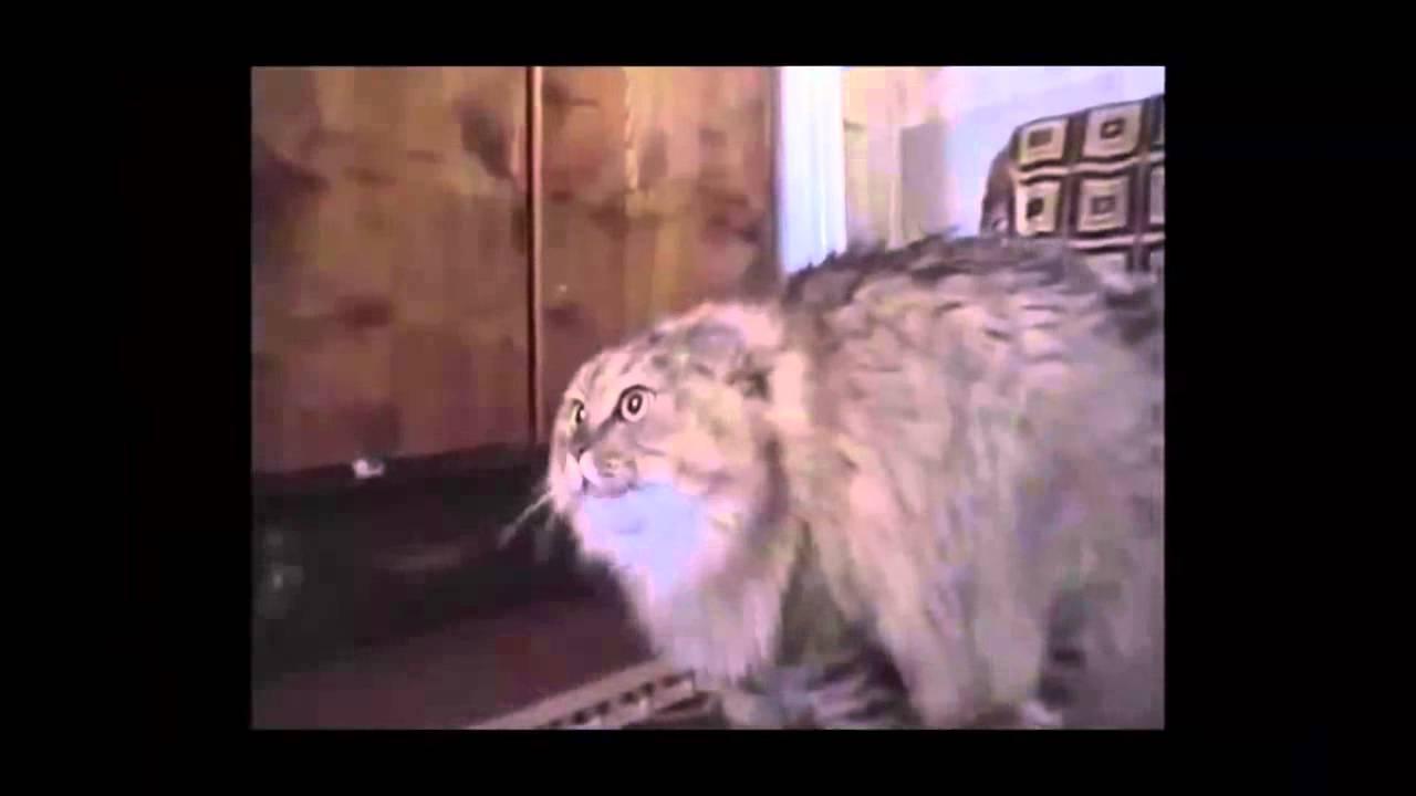 Программа для фото с котами