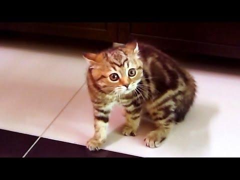 Halloween Cats :  Dance of  Intimidation