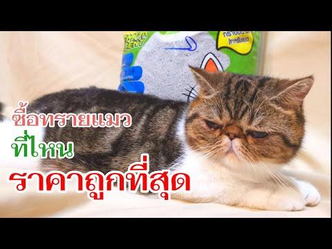 ซื้อทรายแมวที่ไหนราคาถูกที่สุด