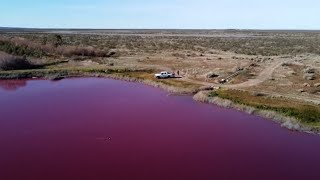 video: Watch - Pollution turns lake in Argentina bright pink