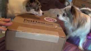 PetFlow.com Spoiled Rotten Box January 2013