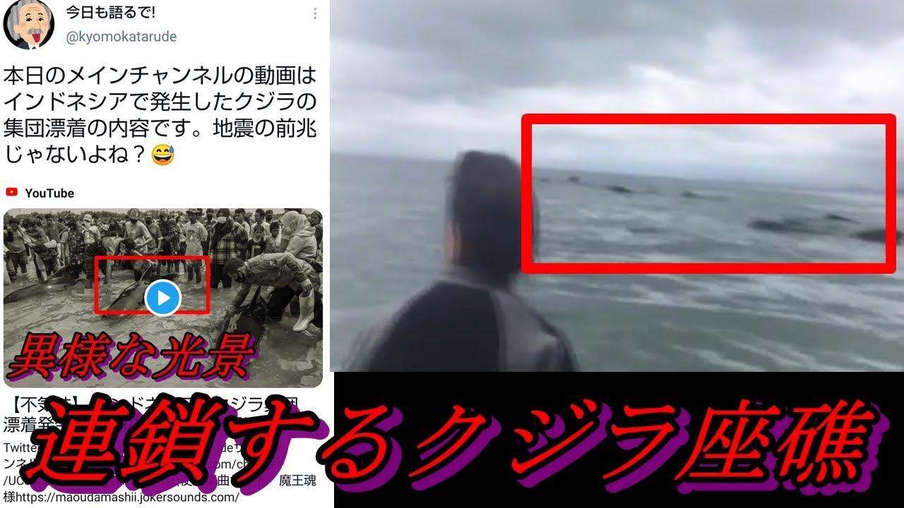 【連鎖する異変】 インドネシアに続き今度はニュージーランドでクジラの集団座礁が発生! いったい海の中で何が起きているのか 【地震前兆の都市伝説】