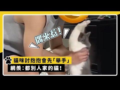 貓咪討抱抱會先「舉手」  網羨:都別人家的貓!