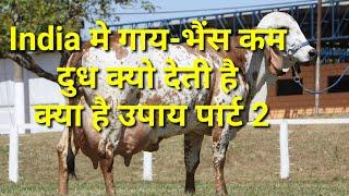 गाय-भैंस के दूध उत्पादन को बढ़ाने के वैज्ञानिक उपाय पार्ट-2. how to increase milk yield