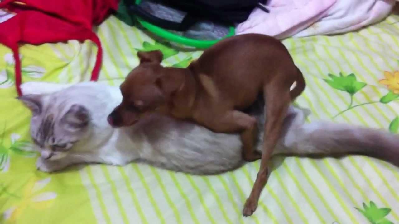 Video zoofilia  Argentina follando y peteando perro