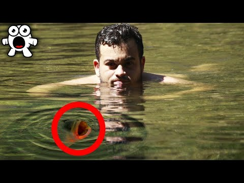 BEWARE When Swimming! This Cute Creature is VERY Dangerous