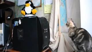 Самые смешные видео с животными