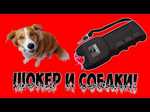 видео: ЭлектроШокер и собаки!