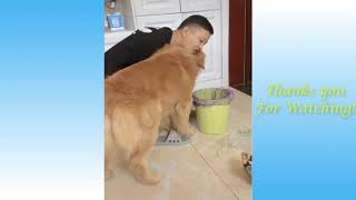 Cute Pets And Funny Animals Compilation #1   Pets Garden