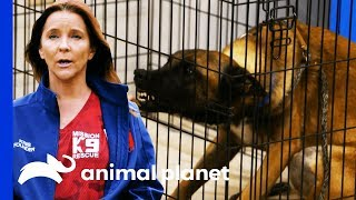 Mission K9 Rescue Helps Tia With A Difficult Breed Of Dog   Pit Bulls & Parolees