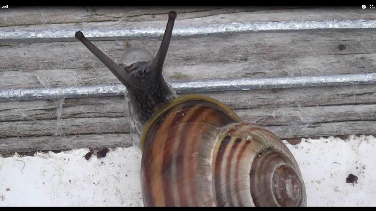 How To Make A Garden Slug Snail Repeller Fence Battery Powered Youtube