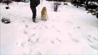 雪の上をウサギのように走ります~