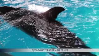 События репортаж ПБК  Дельфины