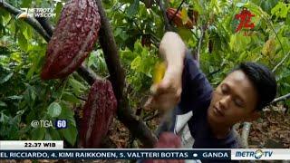 Ironi Negeri Penghasil Kakao