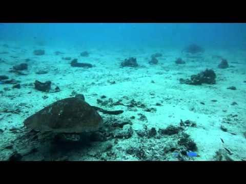 Phoenix Divers Open Water Diver Course-Turtle Experience