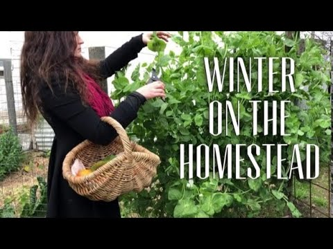 BACK YARD HOMESTEADERS WINTER VLOG - 20 Weeks in lockdown