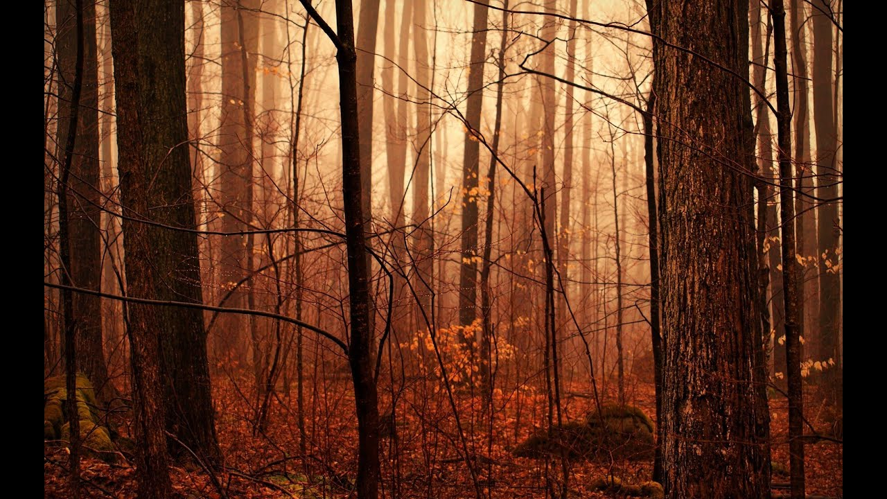 Fall Evening Wallpapers Dark Autumn Music Autumn Forest Youtube