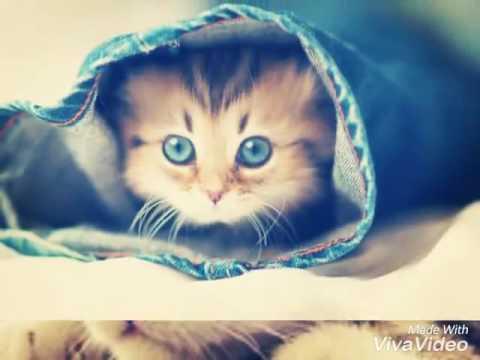 10 Самых милых фото котиков ♥♥♥