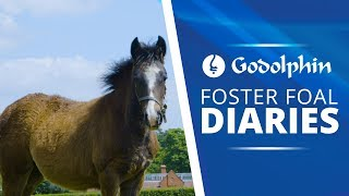 Diary of a Foster Foal