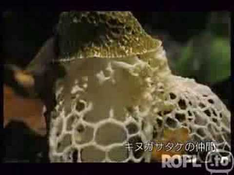 growing-mushrooms-in-fast-motion