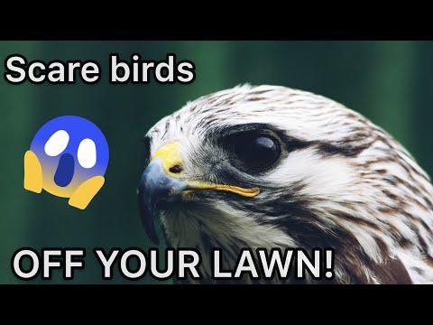 Scare birds away sounds. Bird Repellent 8+ hours Hawk, Eagle, Owl, Shouting, Cat, Fox, Etc.