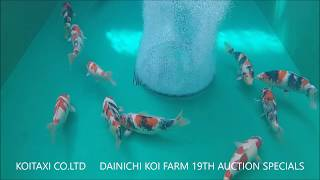 Dainichi Koi Farm 19th Auction Specials Tank (10 Minute view) thumbnail