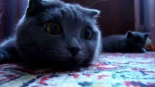 Кошачьи глазища