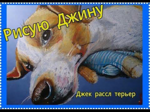 Собаки и щенки породы джек-рассел-терьер. На доске объявлений olx казахстан легко и быстро можно купить щенка джека рассела. Заведи друга прямо сейчас!