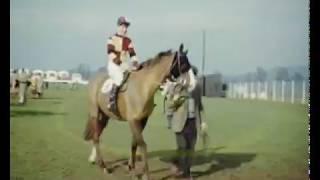 Horse Racing Cheltnam Newon Abbott 1950s
