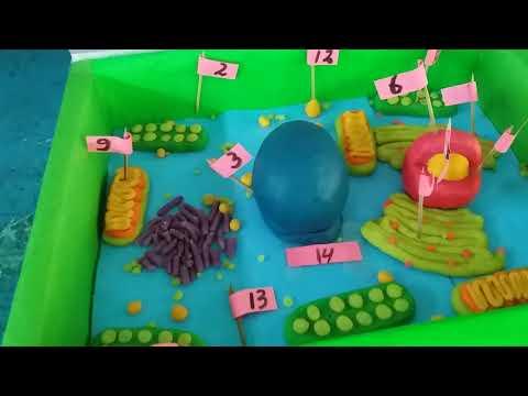 Presentasi model sel tumbuhan kelas 7g klpk 1 smpn 1 selorejo blitar