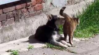 Кот и собака любовь с первого взгяда! Cat and dog