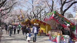 富士森公園の桜2018