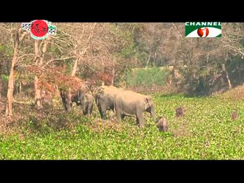 Nature and Life   Episode 154 (Endangered Wildlife and Environment)