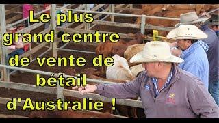 Roma : visite du plus grand centre de vente de bétail d'Australie