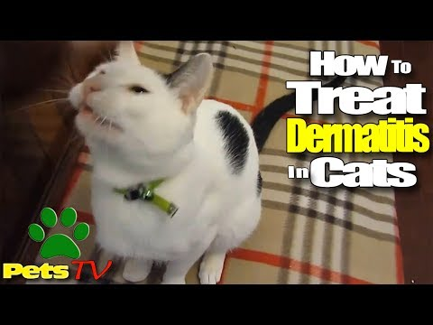 look-how-to-treat-dermatitis-in-cats