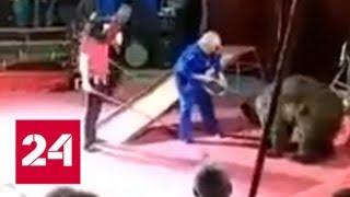 Опасный цирк: чем рискуют зрители во время шоу - Россия 24