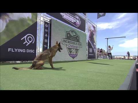Diving Dog Competition - 2017 Purina® Pro Plan® Incredible Dog Challenge® Western Regionals
