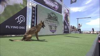 Diving Dog Competition  2017 Purina® Pro Plan® Incredible Dog Challenge® Western Regionals