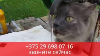 Кошка Агата в поисках дома. Нибелунг в дар