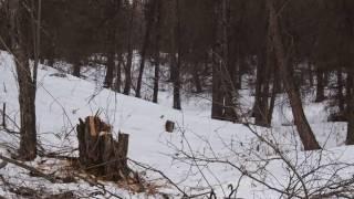ЭКОСТАН. Вырубка лесов Ак-Тюза .Часть 1