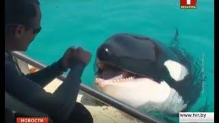 Ученые обучили касатку Вики из французского аквапарка здороваться и считать до трех
