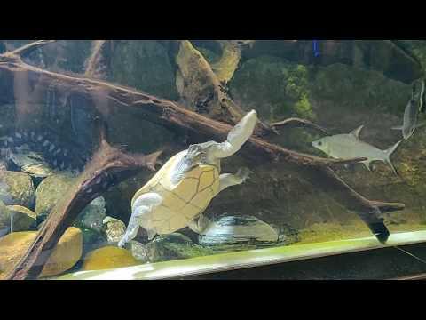 """[video] My Visit To """"dubai Aquarium!"""" Tortoise"""