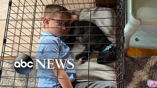 Pet adoptions on the rise