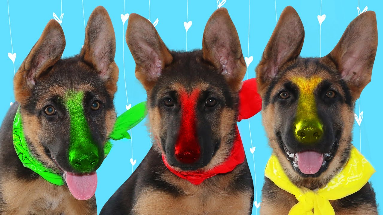 Learn Colors with Funny Puppies   Fivekidz Family