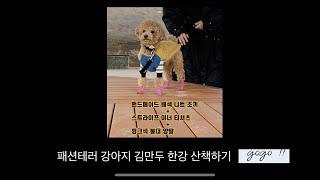 패션테러 강아지 한강산책 (feat. 핸드메이드 니트베…